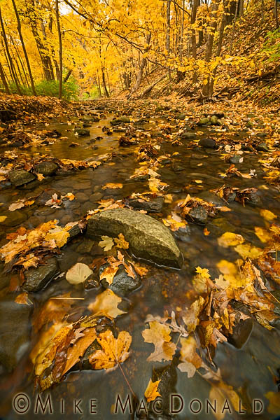 Along this tranquil autumn stream at Black Partridge Woods,monsters hide in plain sight. Copyright 2012 Mike MacDonald Photography, Inc.—All Rights Reserved. Please contact Mike MacDonald Photography for Legal Permission to use image or text.