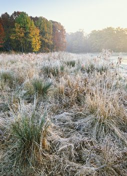 A Gentle Frost