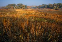 Bluff Spring Fen - Autumn - 0010