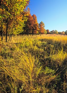 Autumn Savanna Grasses - Card