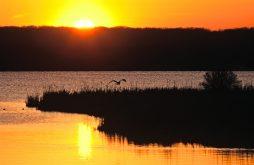 At sunset, a great blue heron takes flight at Saganashkee Slough.