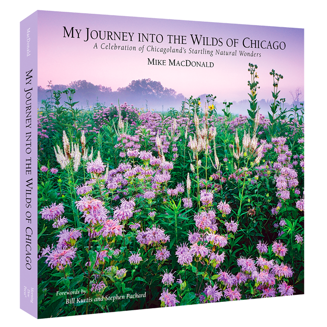 Book cover of My Journey into the WIlds of Chicago by Mike MacDonald