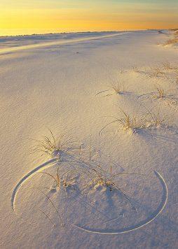 Dreams in the Snow