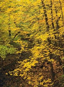 Fall Filigree - Black Partridge Woods - Autumn - 0005