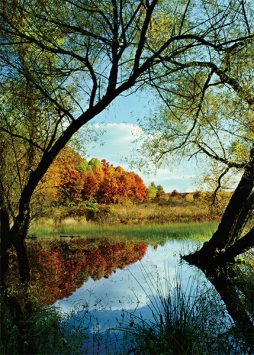 Chicago nature note cards by Mike MacDonald.