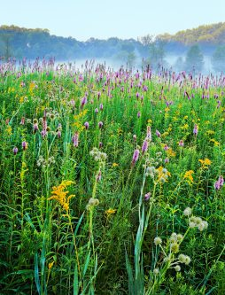 Chicago nature print of a prairie at Spears Woods in Willow Spring, Illinois, part of Cook County Forest Preserves.