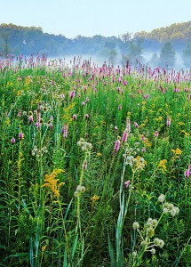 Wiildflowers seem to float above the prairie like musical notes in a symphony of color and texture at Spears Woods.