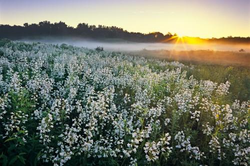 "Bluff Spring Fen - 0140 ""Tender Kiss of Light"""